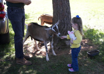 Columbus Farm Fest - girl petting goats