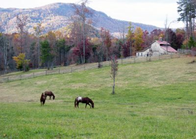 Fall Mountain Horses