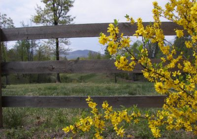 Polk_Co_spring_mtn_fence