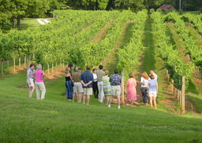 Rockhouse vineyard tour